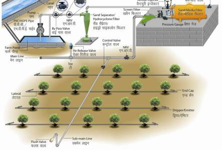 Drip Irrigation Layout