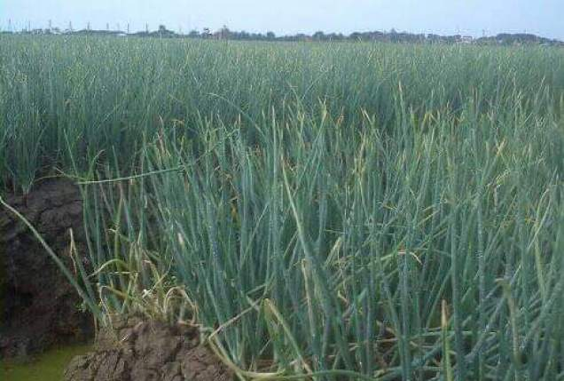 Advantages and Disadvantages of Centre Pivot and Lateral Move Irrigation System