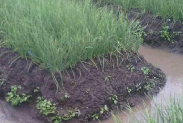 Types of Manual/Traditional Irrigation