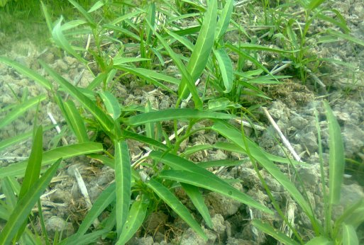 Crop Yield Definition