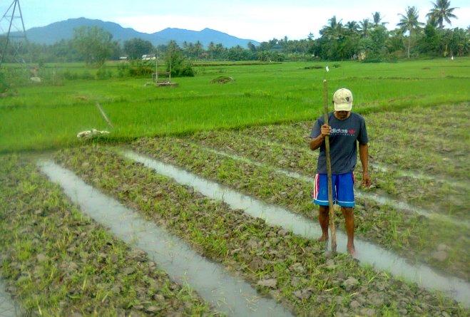 Contour Furrow Irrigation Method