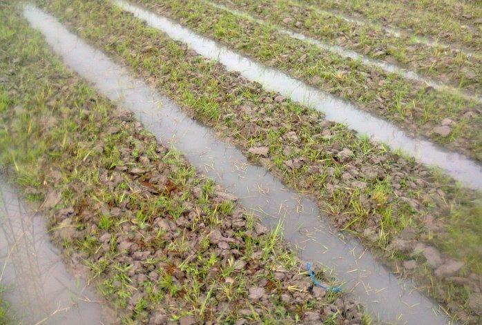 The Advantages and Disadvantages of Contour Furrow Irrigation