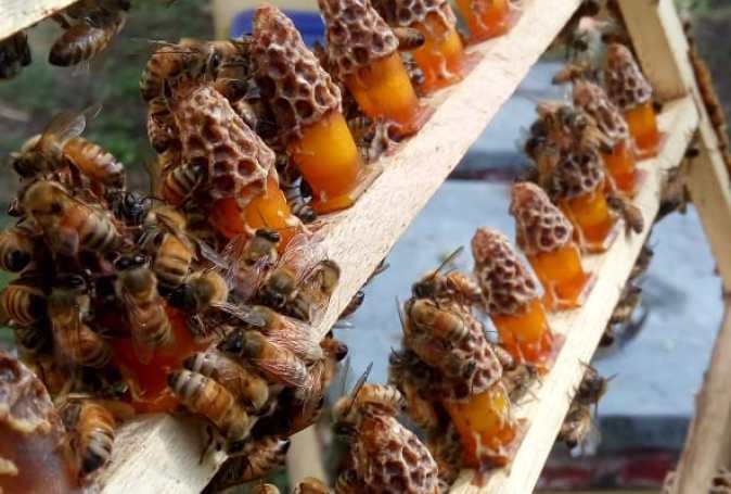 Getting bee pollen