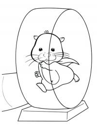 Hamster Color Pages Free Coloring Pages For You And Old