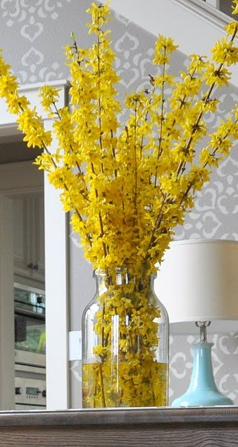 Forsythia Blooming And Decoration Ideas 1001 Gardens