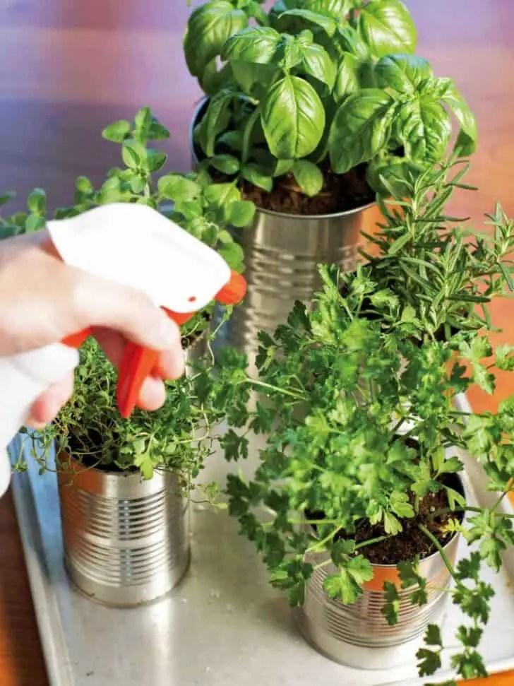 Tin Cans Into Kitchen Countertop Herb Garden 1001 Gardens