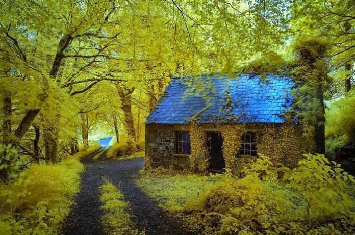 casa_floresta1
