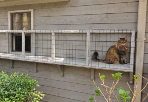 outdoor-catio-cats-2-640x440