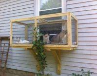 outdoor-catio-cats-4-640x504