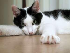 Welke naam krijg ik? :) Een foto van een leuke & schattige kat