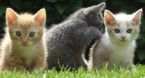 3 leuke katten bij elkaar die voorkomen in de top 5 populaire kattennamen