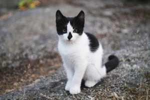 Cute katje!