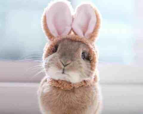 Leuk vrouwtjes konijn