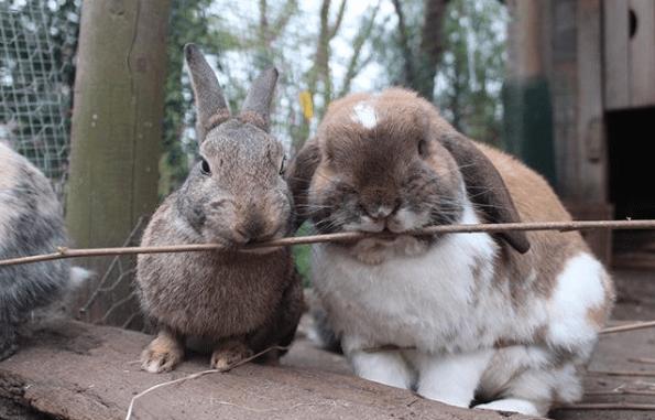 Namen voor konijnen duo