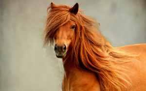 Beige paard met prachtige manen.