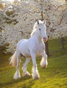 Wit paard in groene wei