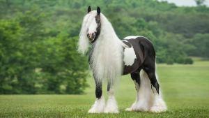 Prachtig verzorgd paard in een groene omgeving.