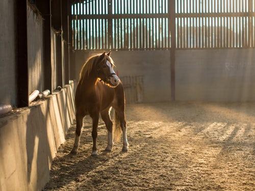 paardje in de stal