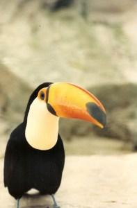 Malibu is zijn vogelnaam