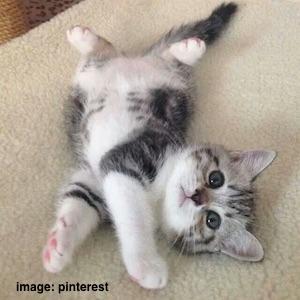 cute-cat-2