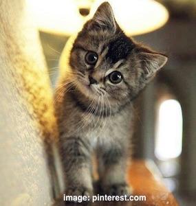 cute-cat3