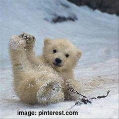 cute-polar-bear