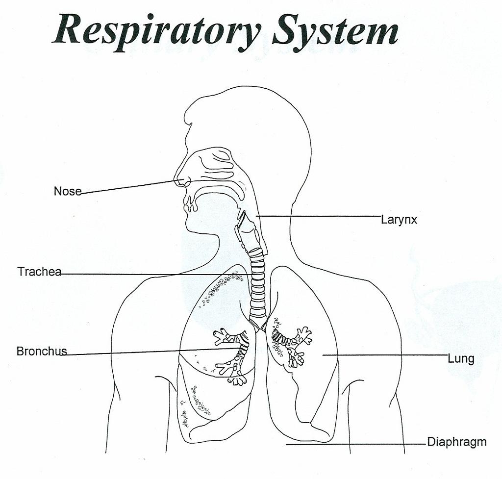 Lung Diagrams