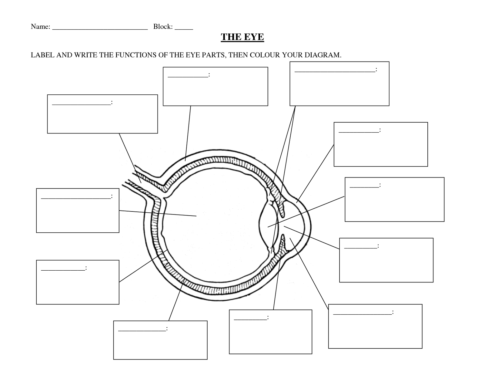 Human Eye Diagrams With The Unlabeled