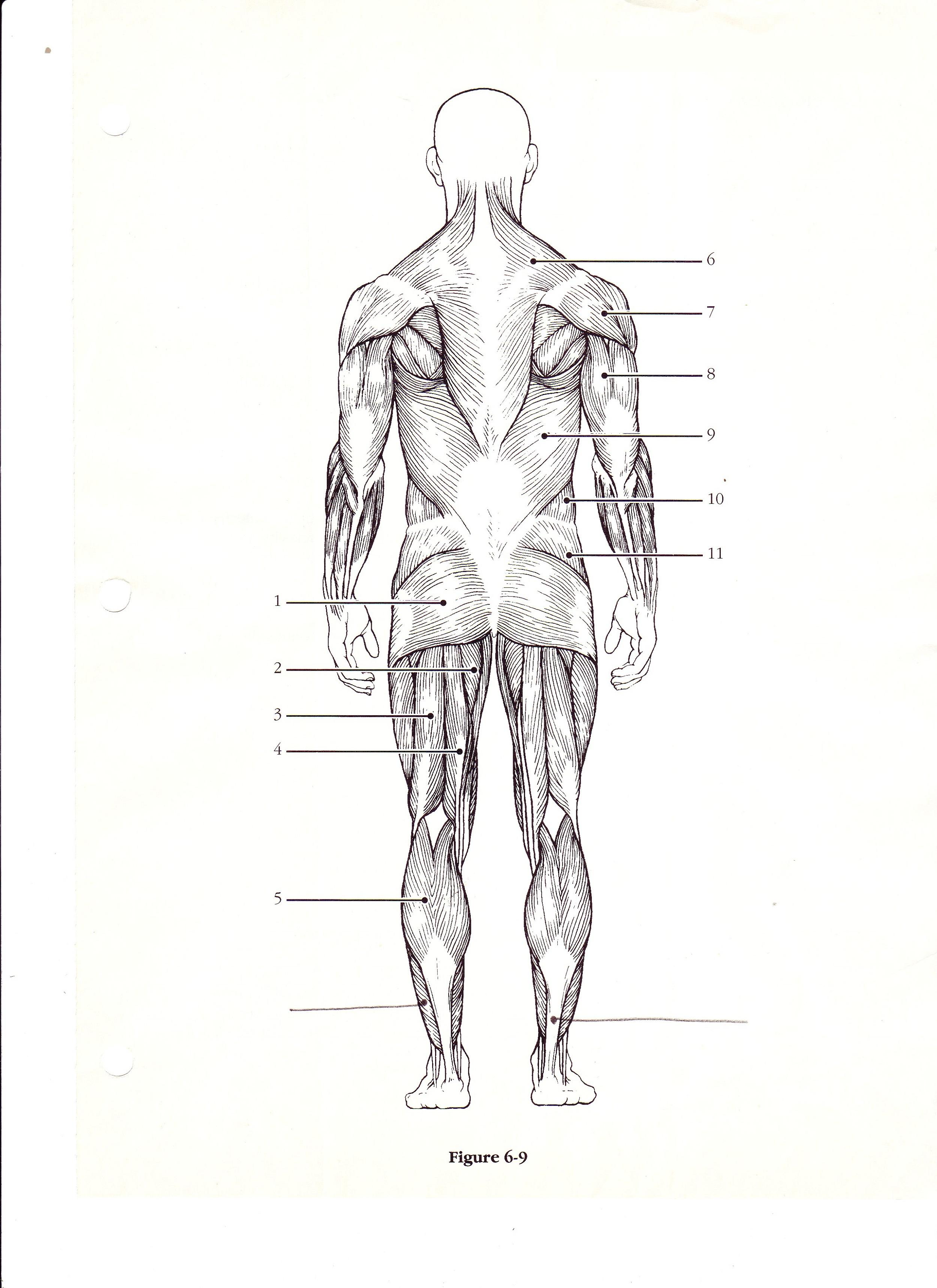 Diagram Of Human Organs 3d And Skeleton Anatomy