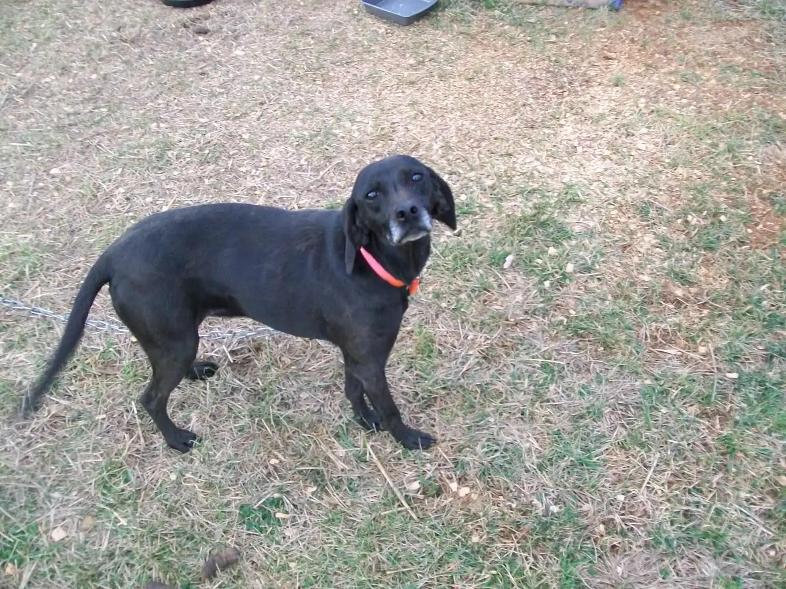 Image result for black cur dog