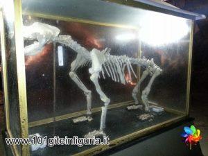 Grotta di Bossea, scheletro di orso