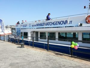 Whalewatching da Genova