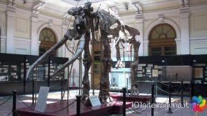 Le Domeniche al Museo di Storia Naturale @ Museo di Storia Naturale | Genova | Liguria | Italia