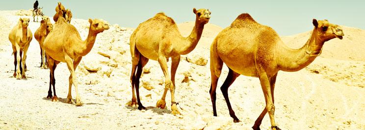 kameler2