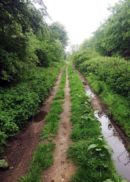 A dead straight mudddy track on the Peddars Way Roman road, edged with trees on either side. Deer tracks can be seen in the mud.