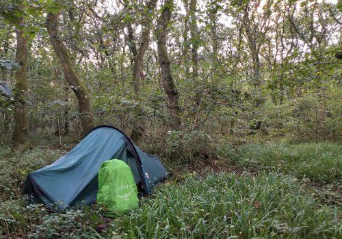 Wild camping in an oak wood