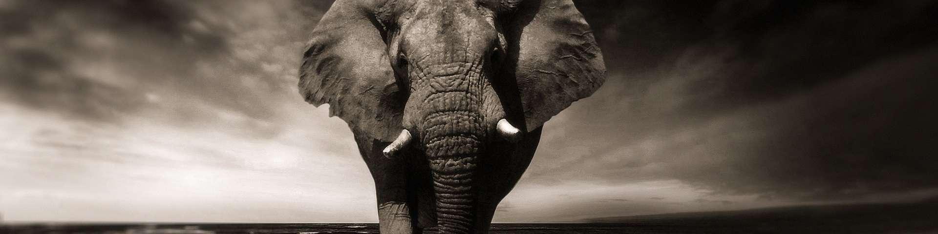 oudste dieren