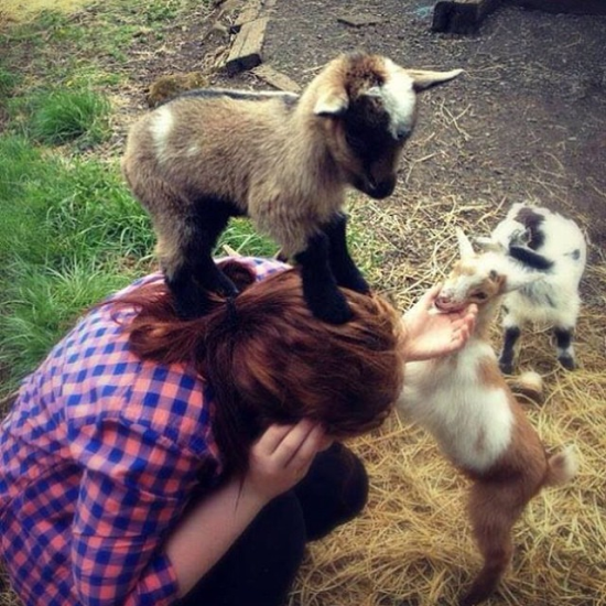 hot-girls-goats-0000