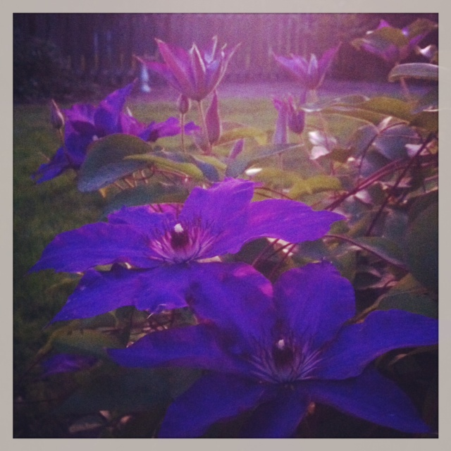 gardenflowers