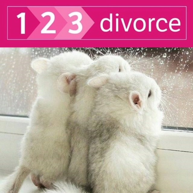 Divorce Questions Answered – When can I get a divorce?