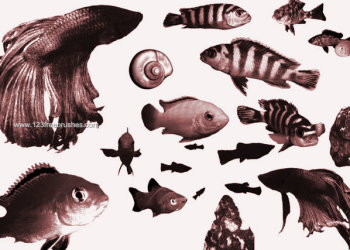 Free Photoshop Fish Silhouette Brushes