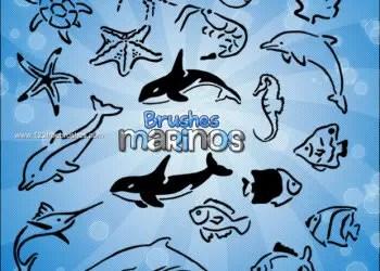 Dolphin Fish – Starfish – Seahorse – Turtle