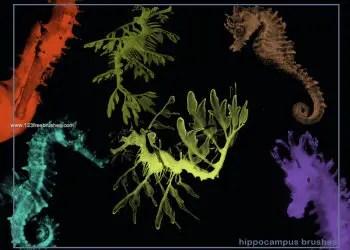 Hippocampus Seahorse
