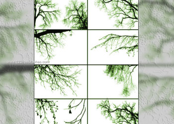 Branches Tree Photoshop Brushes