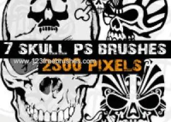 High-Resolution Skull