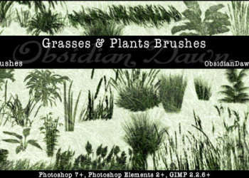 Grasses and Plants