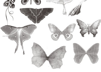 Butterflies and Moth