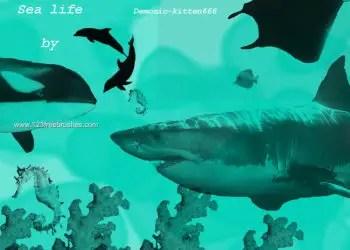 Sea Life – Shark