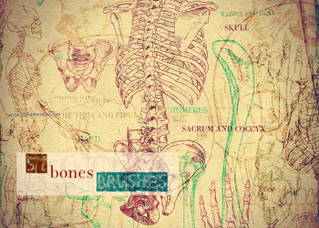 Skull Bones Anatomy