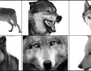 Wolf Brushes for Photoshop